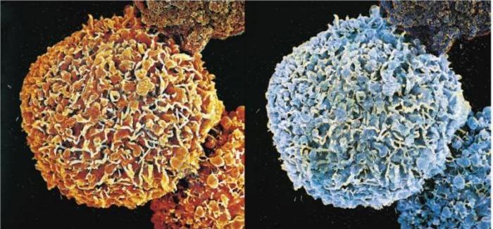Damien Hirst-Second Series Biopsy: M122/372, M 122/373-2008