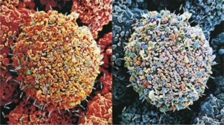 Damien Hirst-Second Series Biopsy: M122/375, M122/374-2008