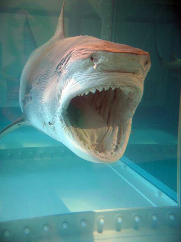 Hirst - The Physical Impossibility of Death In The Mind Of Someone Living, A Shark in Formaldehyde