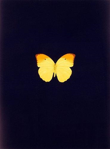 Damien Hirst-Untitled 04 (New Beginnings)-2011
