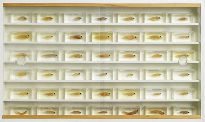 Damien Hirst-Untitled (42 Fish)-1995