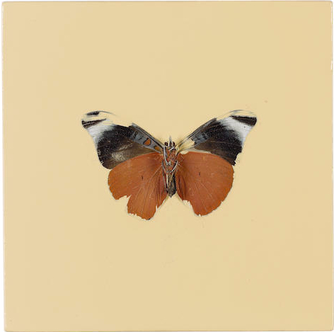 Damien Hirst-Untitled (Butterfly)-