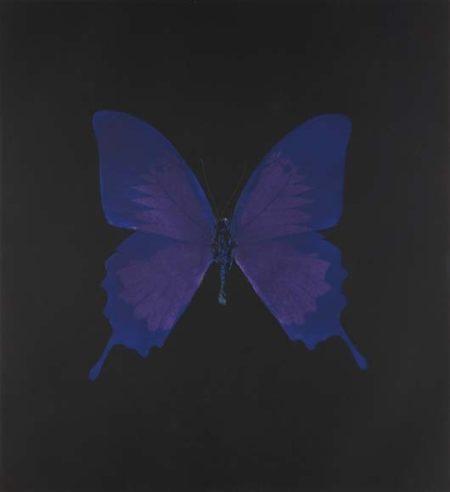 Damien Hirst-Violet Butterfly-2008