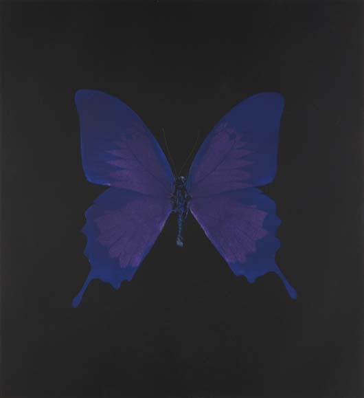 Damien Hirst-Violet Butterfly-2008