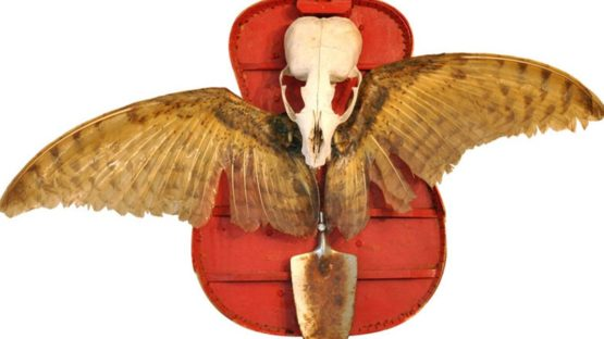 Dan Levin - Bird of Penetration, 2004-2010