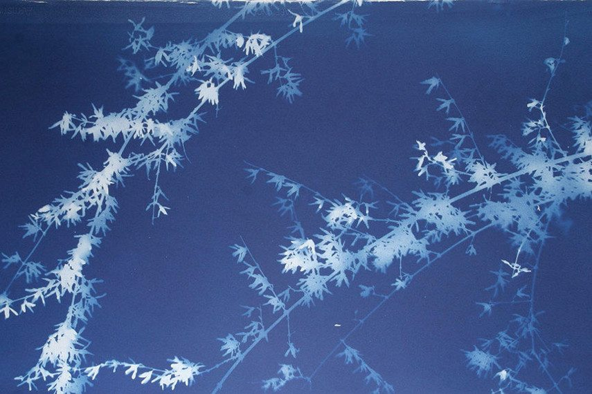 Dan Peyton photograms are an example of photogram technique used to produce cameraless photography. Contact us to see the available photogram works
