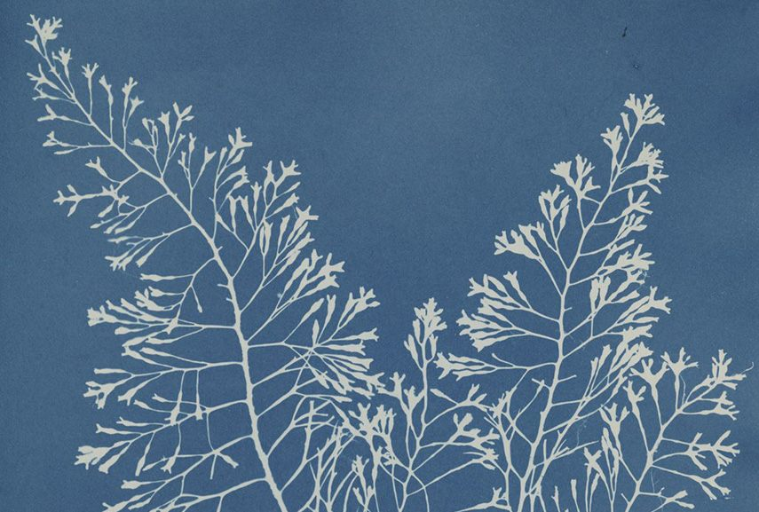 Anna Atkins' photograms were made in a darkroom