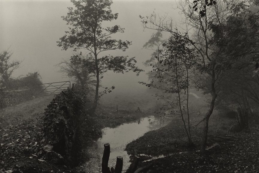 Don McCullin - Woods near My House, Somerset