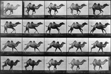 Mastering Motion - The Revolution of Eadweard Muybridge