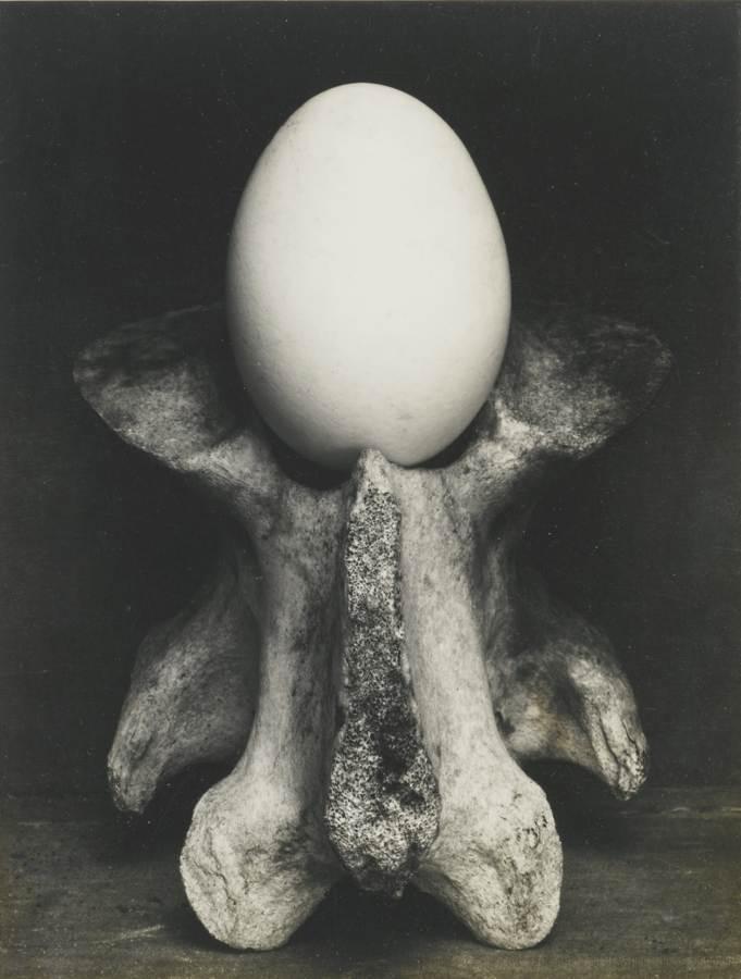 Edward Weston-Egg And Bone-1930