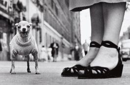 Elliott Erwitt-New York City-1946
