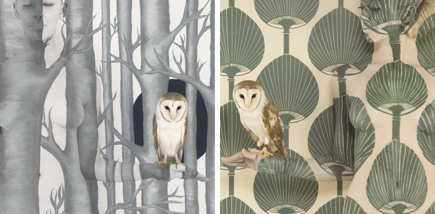Emma Hack - Owl in Woods II - Wallpaper Owl II, new artist on facebook in 2016, culture of the prize works in collection around the world