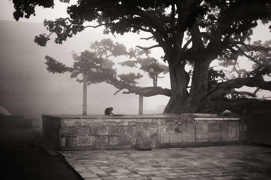 Fazal Sheikh, Dawn along the Yamuna