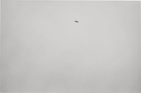 Felix Gonzalez-Torres-Untitled - The Bird Photograph-1994