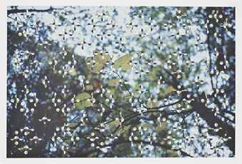 Gabriel Orozco-Light through Leaves-1996