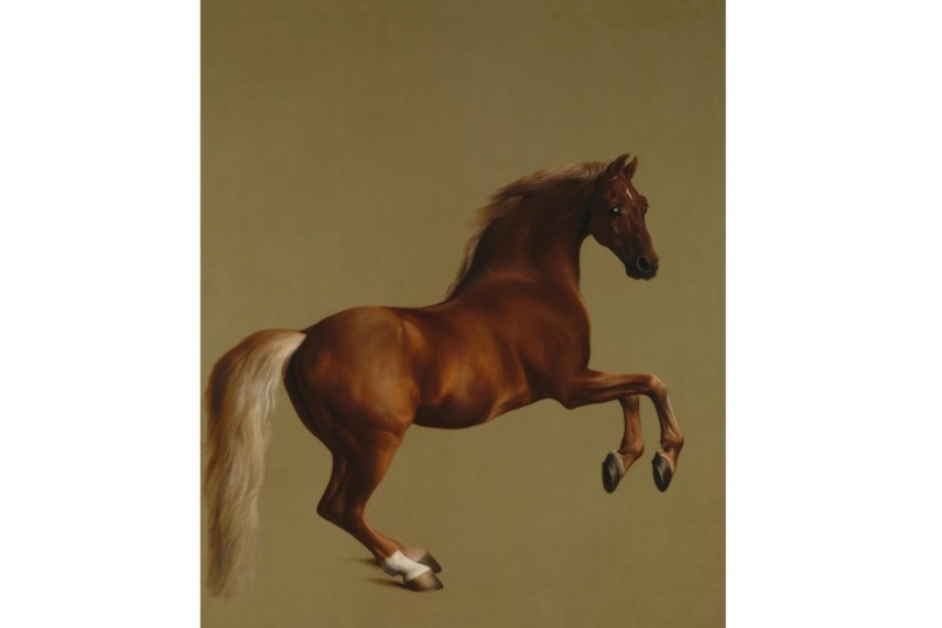 An original horse abstract print or canvas can be done on a white background in oil, watercolor, acrylic or even digital