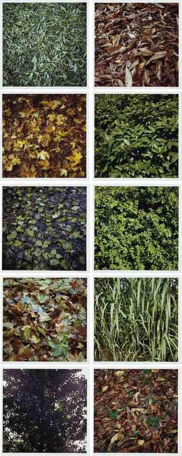 Jan Dibbets-Leaves-2003
