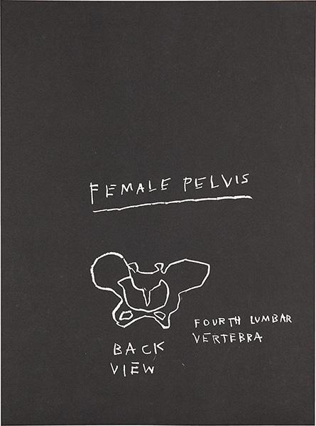 Jean-Michel Basquiat-Anatomy (Female Pelvis, AP)-1982