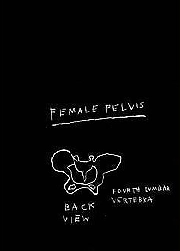 Jean-Michel Basquiat-Anatomy (Female Pelvis, Back View)-