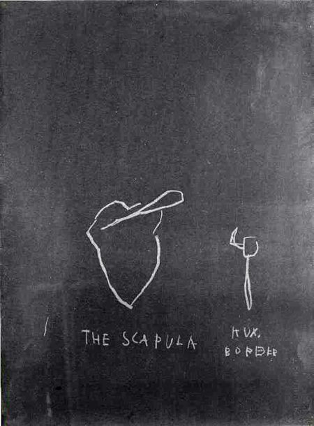 Jean-Michel Basquiat-The Scapula (from Anatomy)-1982