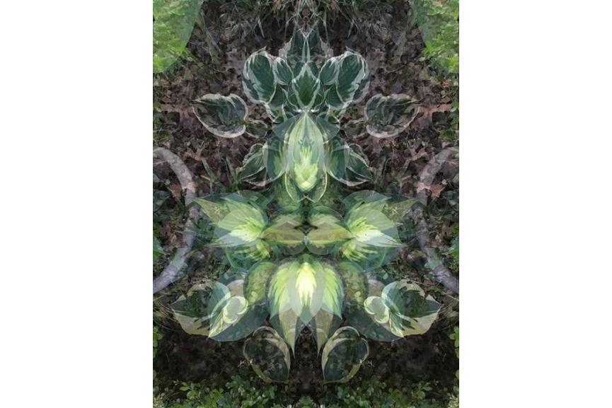 Jeanne Wilkinson - Spring Symmetry