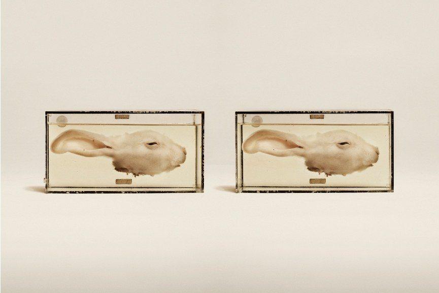 Jim Naughten exhibition