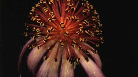 Jonathan Singer - Unique Flower, 2011 (detail)