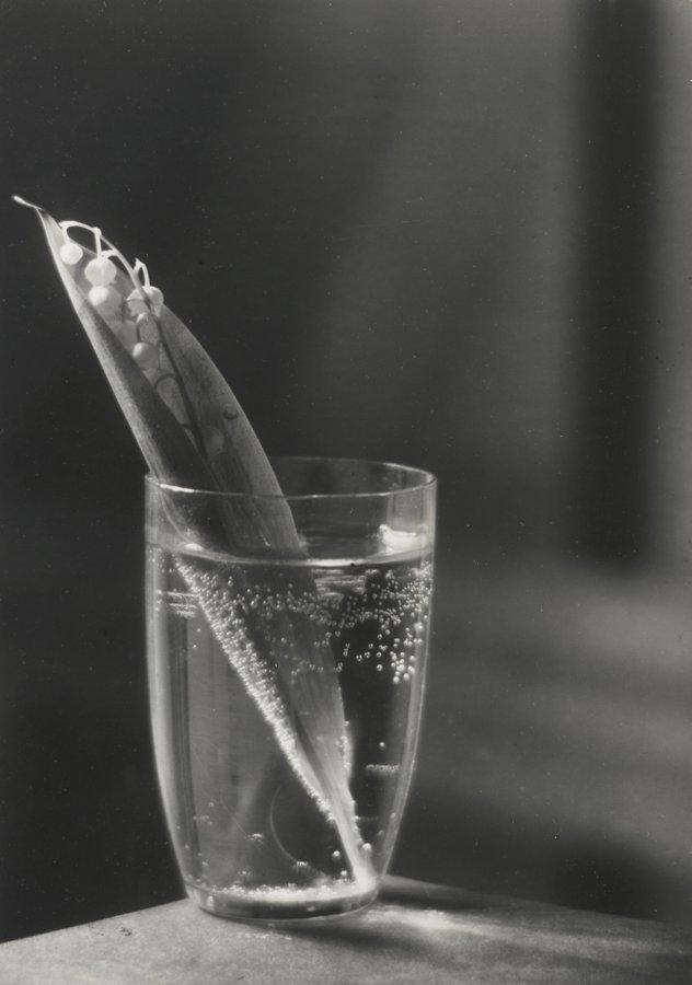 Josef Sudek-Konvalinka (Lily Of The Valley)-1954