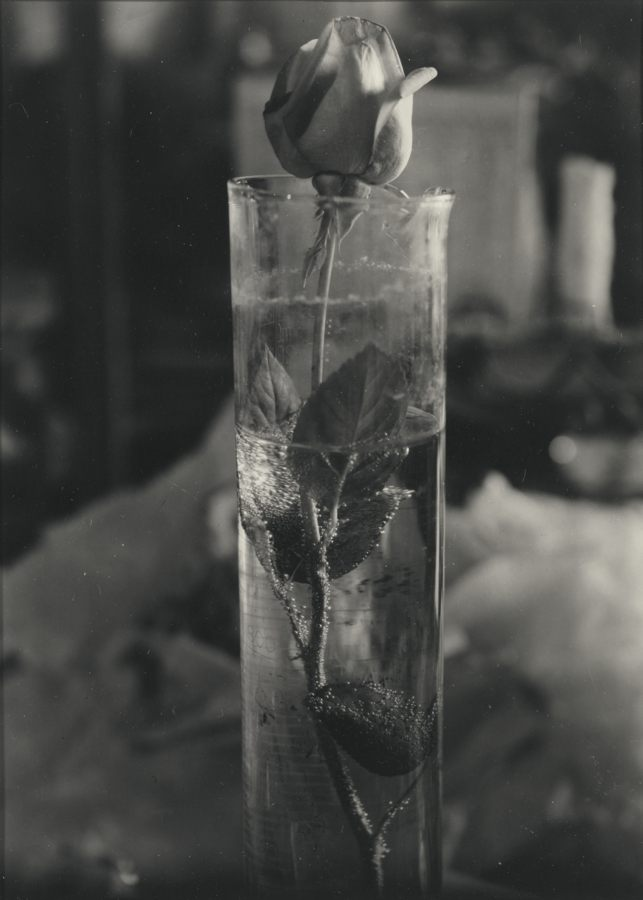 Josef Sudek-Rose In Glass Beaker-1950