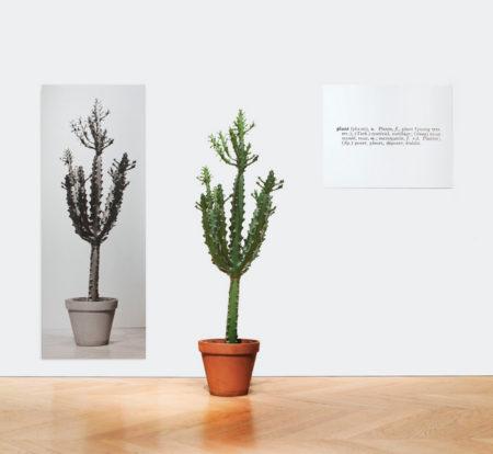 Joseph Kosuth-One and Three Plants-1965