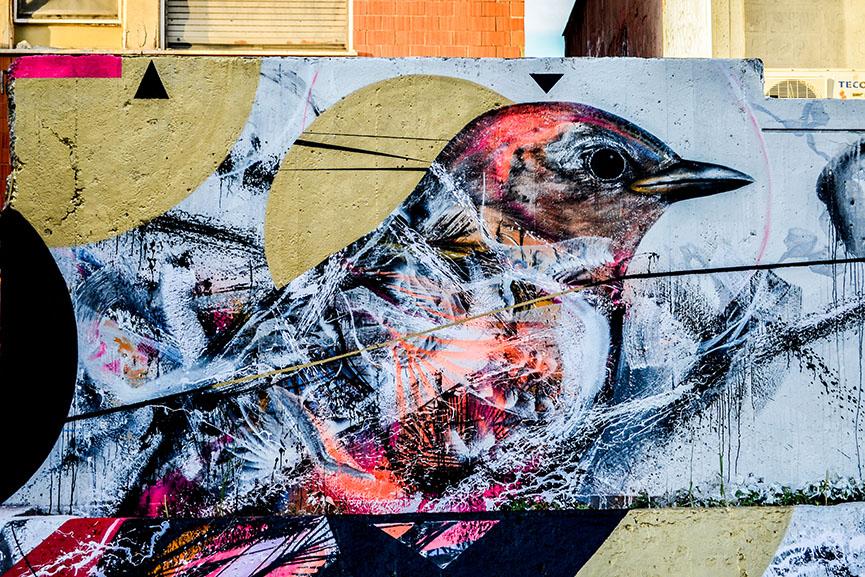 l7m street art, birds of brazil