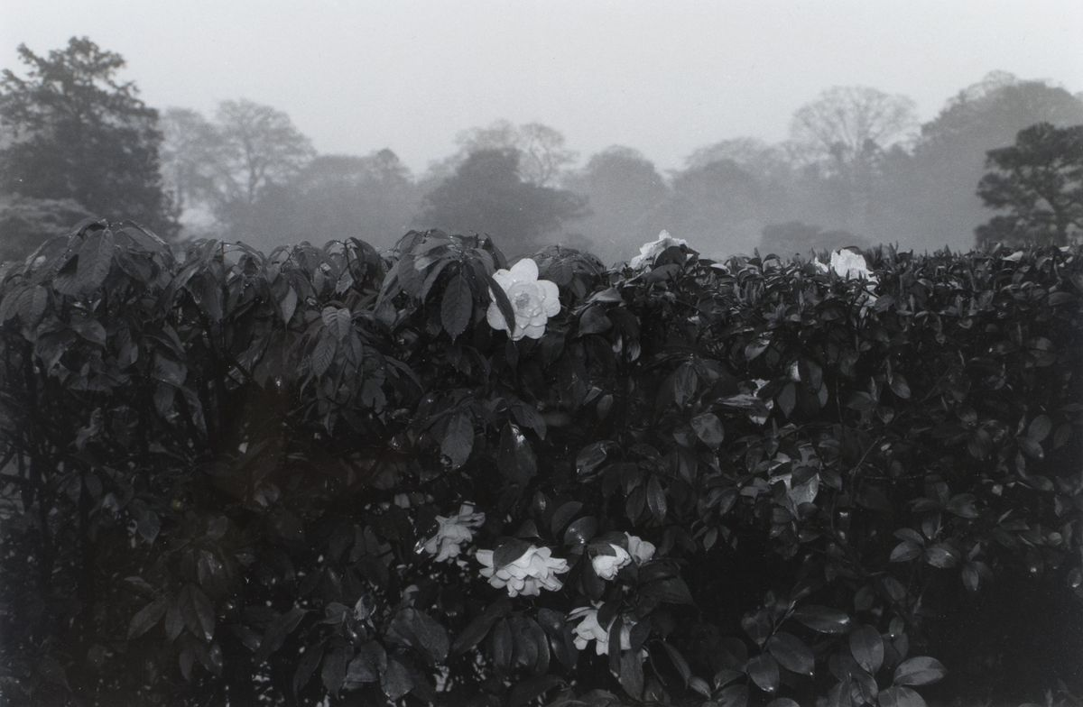 Lee Friedlander - Kyoto, 1977, one of many prints in the gallery