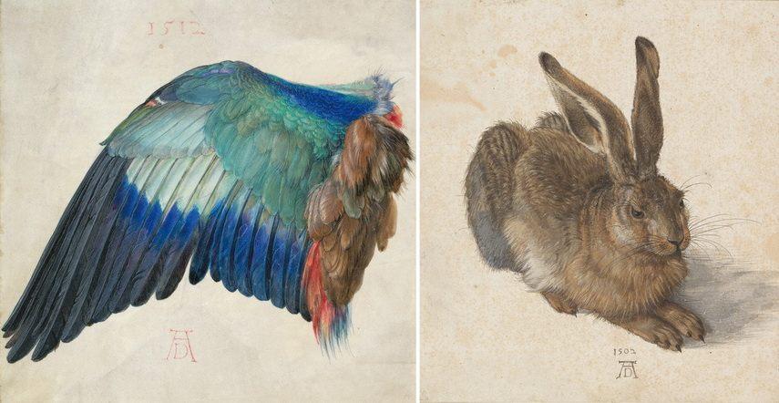 Left Albrecht Dürer - Left Wing of a Blue Roller Right Albrecht Dürer - Young Hare