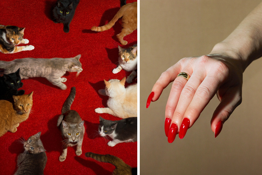 Cats, 2017 / Hand Model, 2017