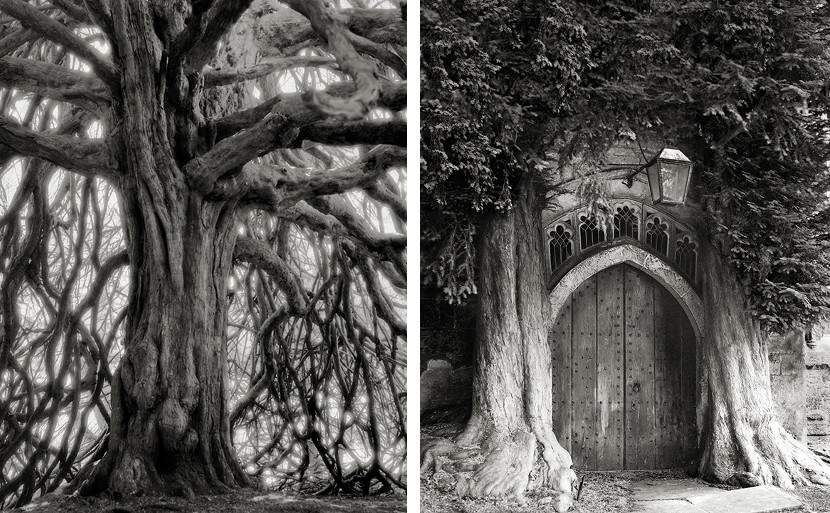 Beth Moon, ancient trees, portraits of time, book, history
