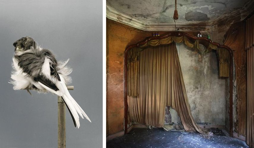 Carsten Holler - Birds (9), 2006, Henk Van Rensbergen - Abandoned Places