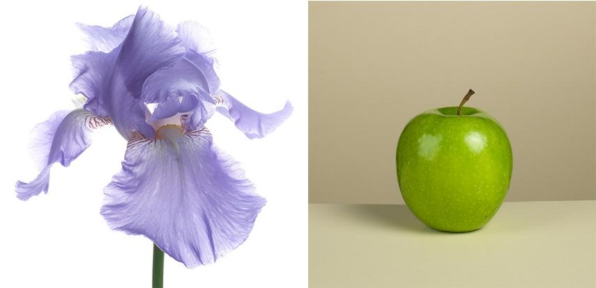 Iris, Pomme