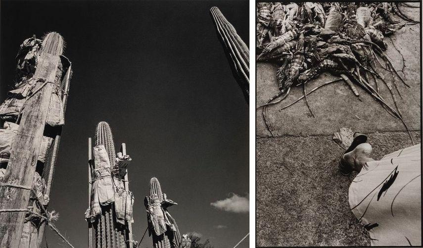 Jardín Botánico, Oaxaca, México, 1998-1999, Iguanas, Juchitán, México, 1984