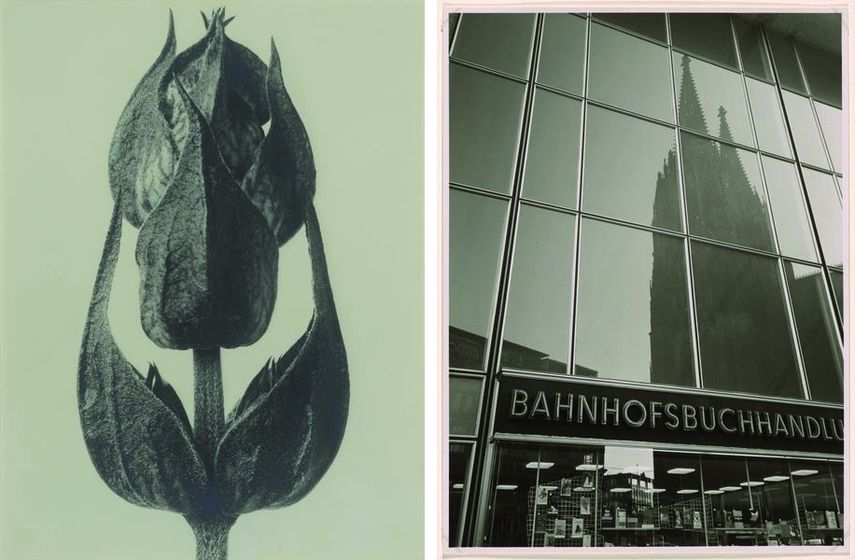 Karl Blossfeldt - Salvia officinalis, Karl Hugo Schmölz - Station bookshop