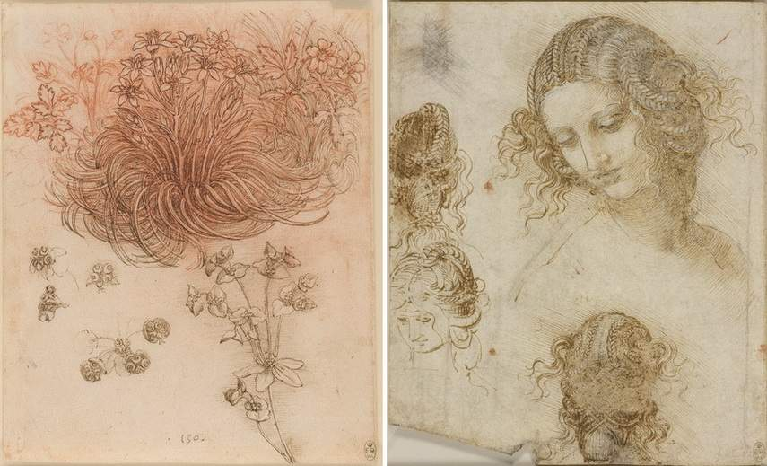 Leonardo da Vinci - Star of Bethlehem and Studies for the head of Leda