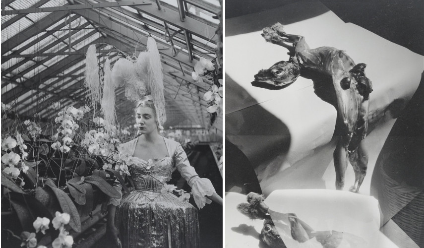 Left Faure in a costume by Pierre Balmain, 1953 - Right Benda Skinned Rabbit Body, before 1958