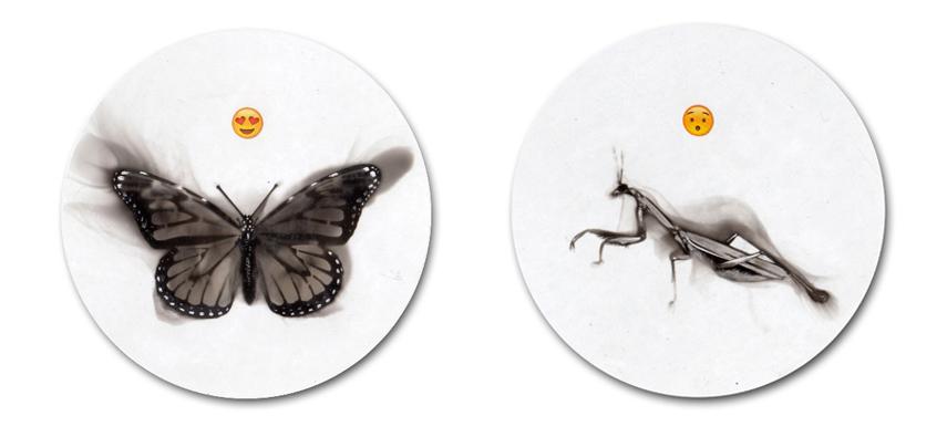 Butterfly, Praying Mantis