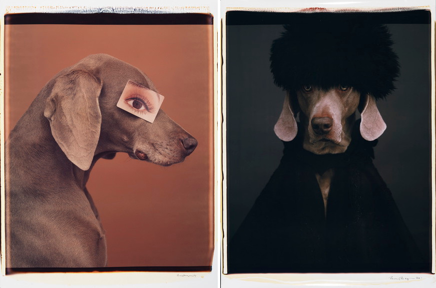 Left William Wegman - Eyewear II Right William Wegman - Igor or Ivan