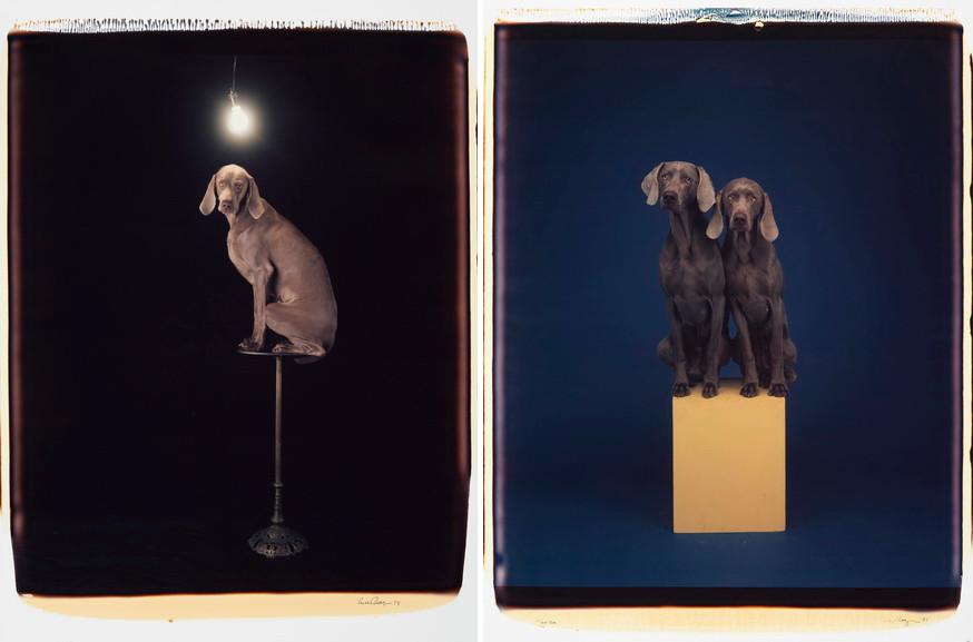 Left William Wegman - Illuminary Lumin Right William Wegman - Two On