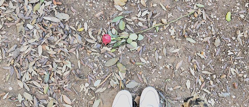 Leman S. Darıcıoğlu - Bir Güle Bakmak, Looking After a Rose, 2018