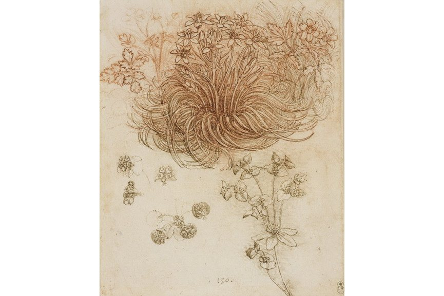 Leonardo da Vinci - A star of Bethlehem and other plants