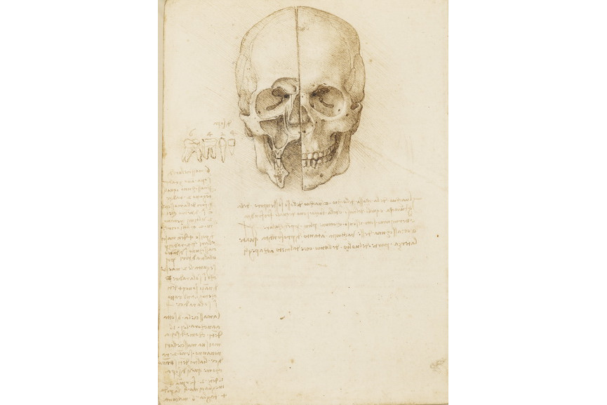 Leonardo da Vinci - The skull sectioned