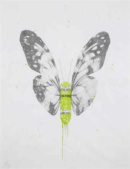 Ludo-Thrasherepidoptera-2011