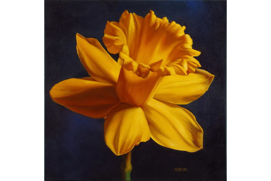 Margaret Morrison – Daffodil