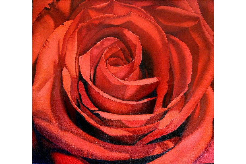 Margaret Morrison - Red Rose